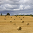 Stock Photo: Dry hay