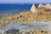 Coast rose — Stok fotoğraf