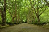 деревья — Стоковое фото