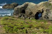 Vegetação no litoral do norte da espanha — Foto Stock