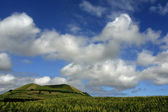 Field of green corn in azores island of Sao Miguel — Stock Photo