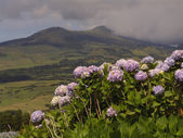 亚速尔群岛景观观 — 图库照片