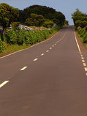 Road in azores — Stock Photo