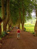 Woman in the path with tree on two side in azores — Stock Photo