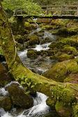 Маленькая река в Северной Португалии парка — Стоковое фото