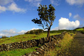 Azores typical view at the island of Sao Miguel — Stock Photo