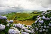 Azores landscape — Stock Photo