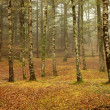 Forest fog in the portuguese national park — Stock Photo #23768049