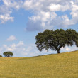 Stock Photo: Alentejo farm view