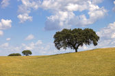 Alentejo farm view — Stock Photo