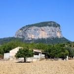 olivos de Mallorca — Foto de Stock