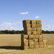 Briquettes of dry hay in a field — Stock Photo