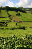 Azores fields — Stock Photo