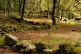 Forest of the portuguese national park — Stock Photo