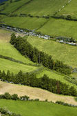 Azores fileds — Stock Photo