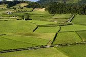 Azores fields — Stock Photo