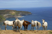 Horses — Foto de Stock