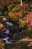 Detalle de río otoñal en el parque nacional portugués — Foto de Stock