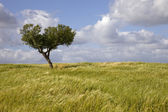 Alentejo — Stock Photo