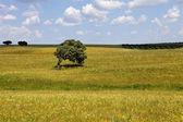 Alentejo farm view — Stock Photo