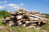 Logs lie on a green grass — Stock Photo