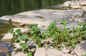 Summer landscape with a stony ripa — Stock Photo