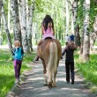 Walk on a horse in summer in a park — Stock Photo