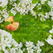 Beautiful designer background with the sprigs of flowering apple — Stock Photo #14280539