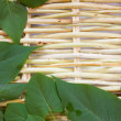 Designer background from the twigs of willow and green leaves — Foto Stock