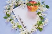 Diseñador de fondo con las ramitas de flores Manzano, no — Foto de Stock