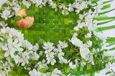 Piękny projektant tła z gałązek kwiatowych jabłko — Zdjęcie stockowe