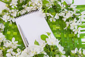 Beautiful designer background with the sprigs of flowering apple — Stock Photo