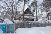 Old house in a pine to the coniferous forest — Стоковое фото