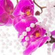 Flowers of pink  orchid and beads from white pearls on a white b — Stock Photo