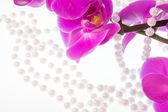 Fleurs d'orchidée rose et perles de perles blanches sur un blanc b — Photo
