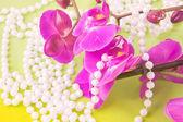 цветки розовые орхидеи и бусы из белого жемчуга на желтый — Стоковое фото