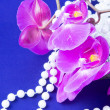 Flowers of pink orchid and beads from white pearls on blue ba — Stock Photo #18347653