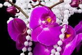 цветки розовые орхидеи и бусы из белого жемчуга на черный — Стоковое фото
