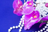 Flowers of pink orchid and beads from white pearls on a blue ba — Stock Photo