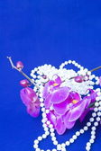 Flowers of pink orchid and beads from white pearls on a blue ba — Zdjęcie stockowe