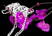 Flowers of pink orchid and beads from white pearls on a black — Foto de Stock