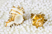 Two cockleshells and beads of pearls — Stock Photo