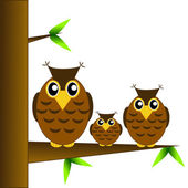 Three owls sit on a tree on a white background — Stock Photo