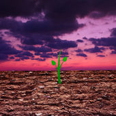 Green sprout in drying up soil — Stock Photo