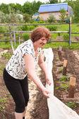 An elderly woman works in a garden — Stock Photo