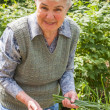 An elderly woman collects spring onions — Stock Photo #28226379