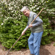 Elderly woman with rakes in hands  — Stock Photo