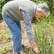 An elderly woman collects spring onions — Stock Photo #28226893