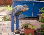 Una donna anziana si affaccia su fiori — Foto Stock