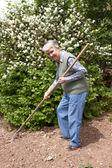 老妇与耙在手中 — 图库照片